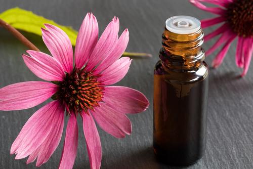 herbs_that_boost_immunity_echinacea.jpg