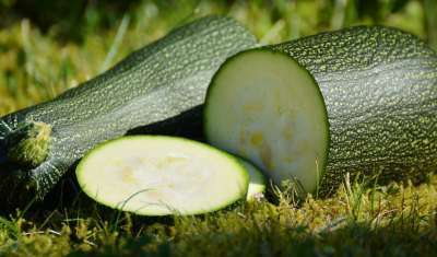 Zucchini featured image