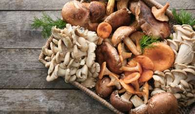 Eating mushroom may prevent ageing