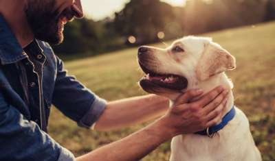 How Your Dog Can Help You Get Over a Breakup